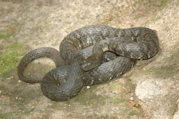 安能辨蛇是雄雌?