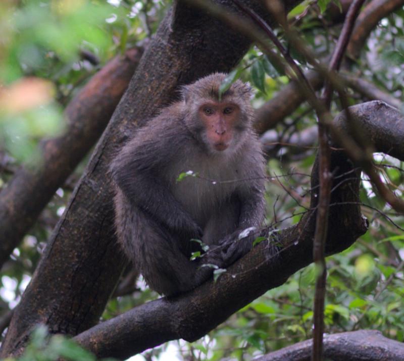 愛牠請不要餵牠!讓臺灣獼猴回歸大自然