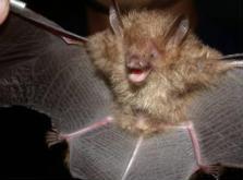 陽明山國家公園蝙蝠多樣性
