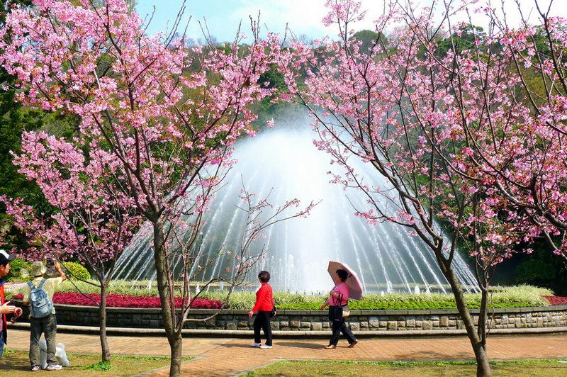 桜の美しさ