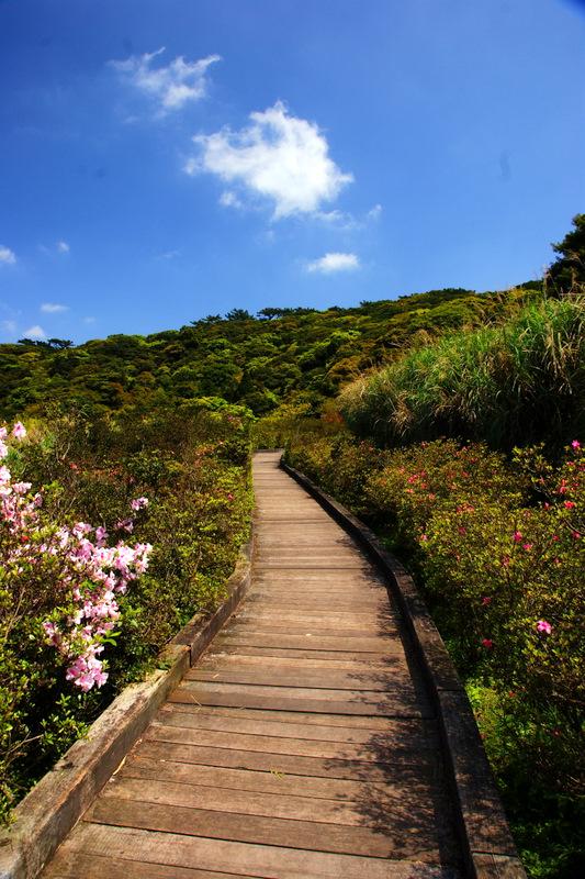 大屯自然公園步道(彭小軒攝)