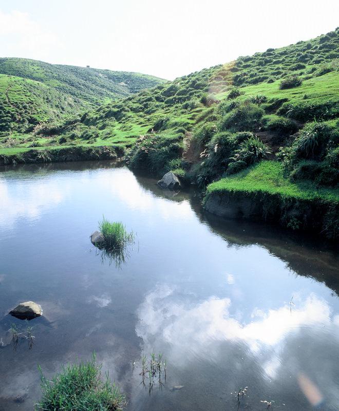 擎天崗の池