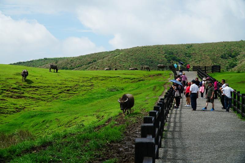 中央步道與草原景觀